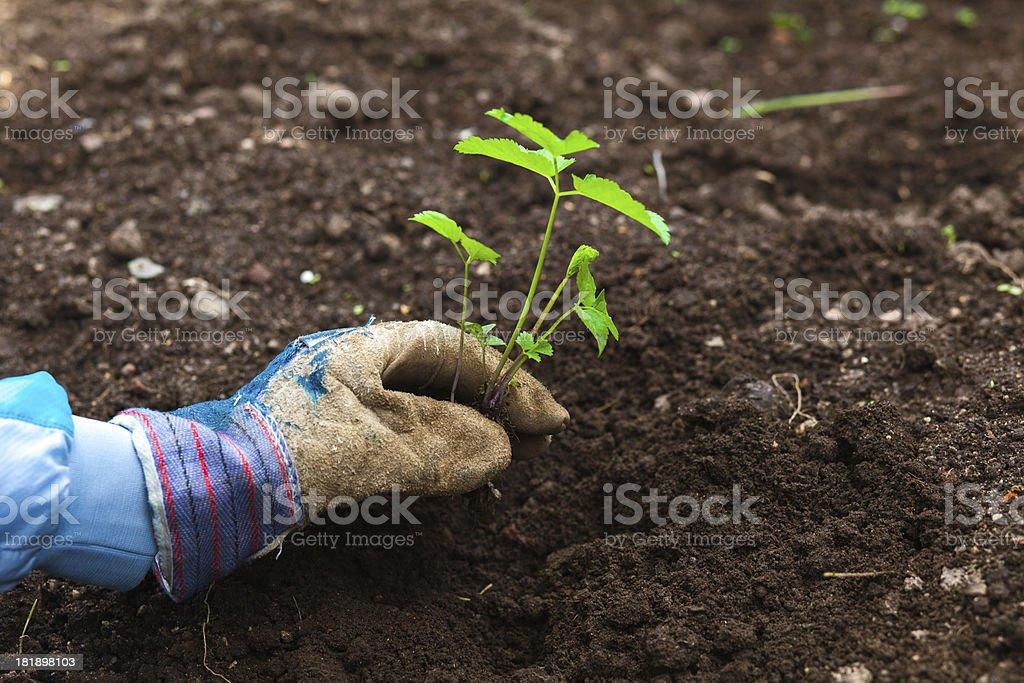 Farmer working in garden royalty-free stock photo