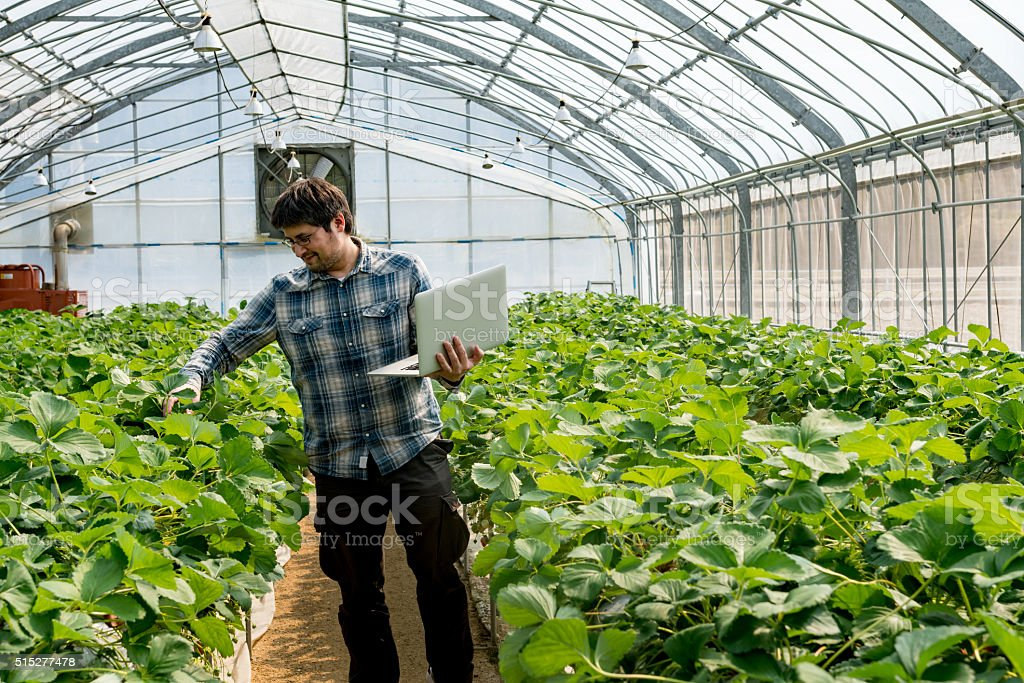 Farmer working in his greenhouse checking crops with a computer stock photo