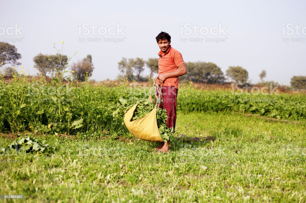 Farmer working in the field stock photo
