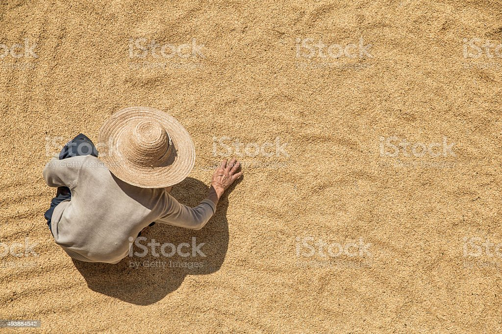Farmer working on harvested grains from above stock photo