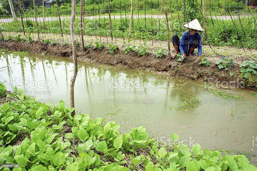 Farmer working on vegetables garden stock photo