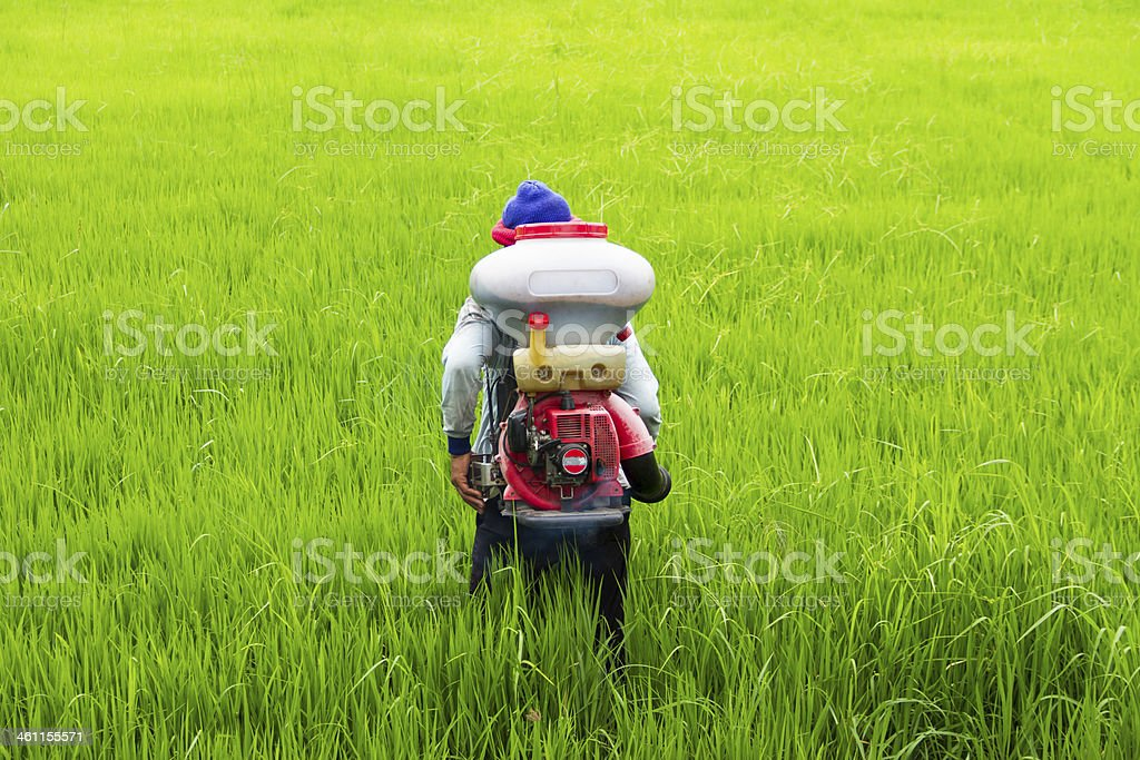 Farmers are sowing fertilizer royalty-free stock photo