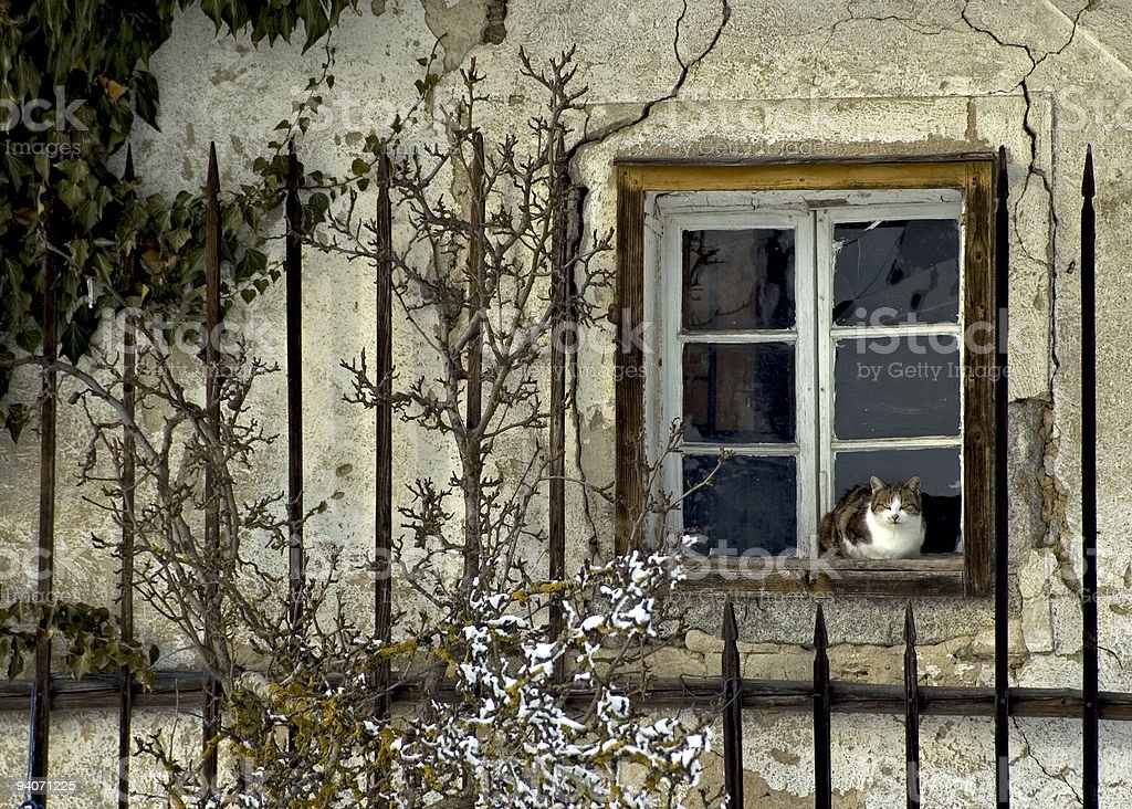 Farmers Cat sitting in Window of Country House royalty-free stock photo