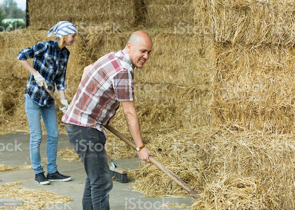 Farmers collecting hay with pitchforks stock photo