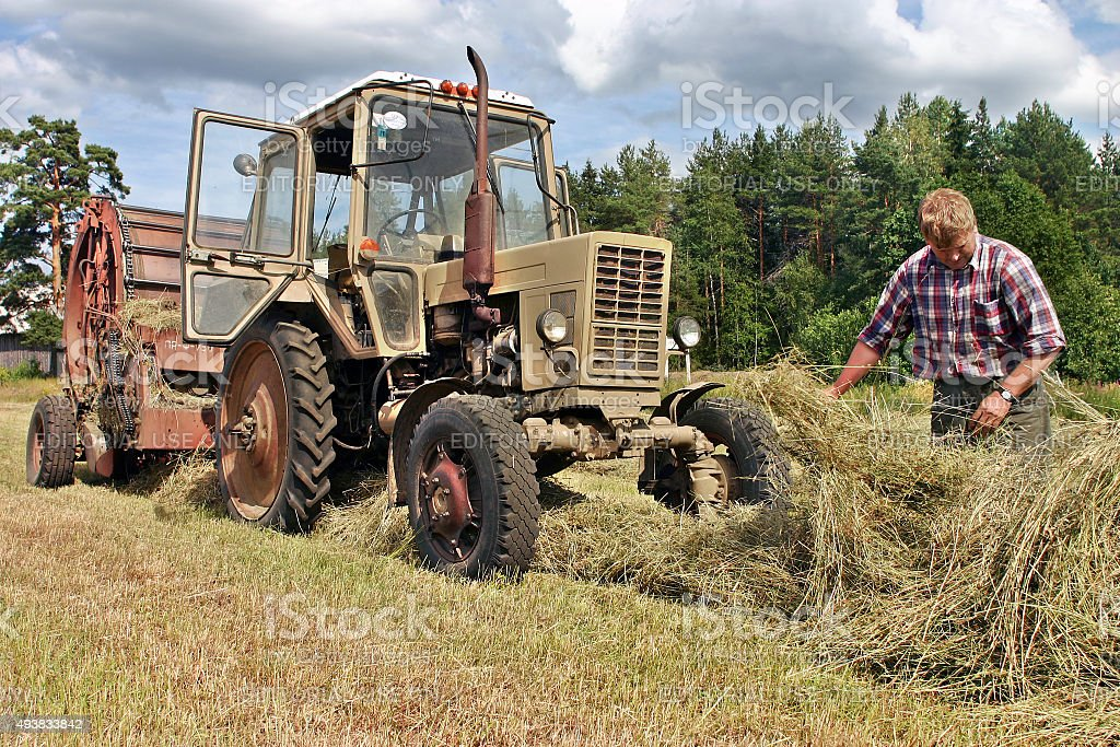 Farmers field , agronom tractor-driver at work checking fresh hay. stock photo