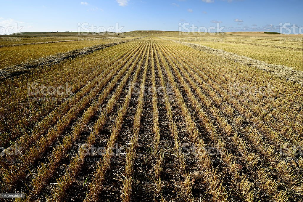 Farmers Field stock photo
