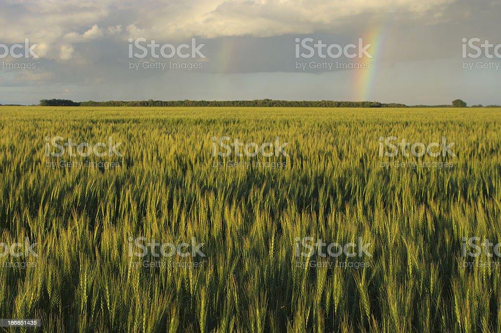 Farmers Field Rainbow royalty-free stock photo