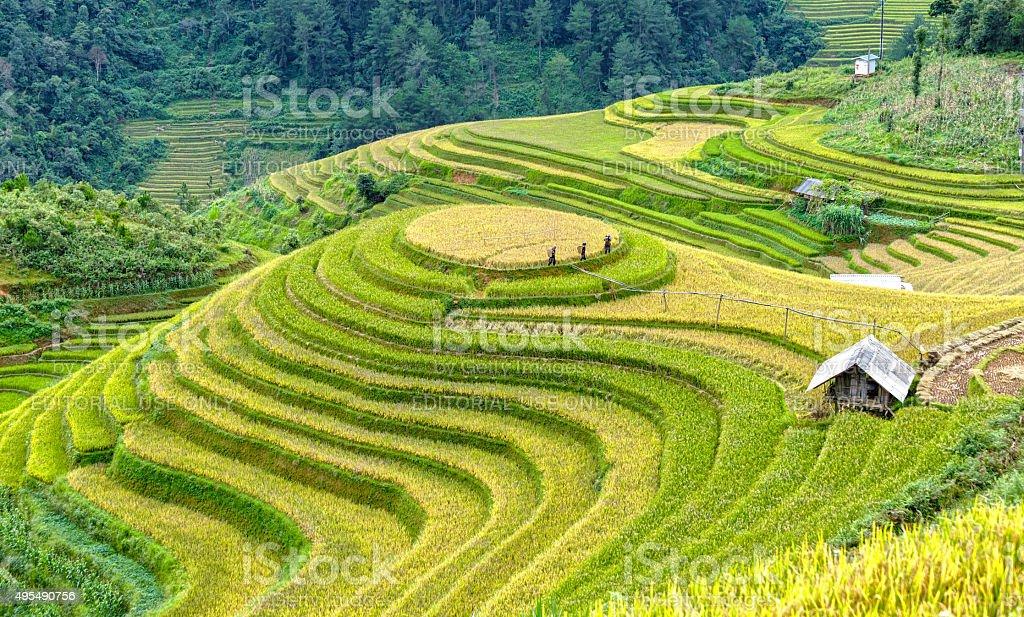 Farmers go check cornfield harvest stock photo