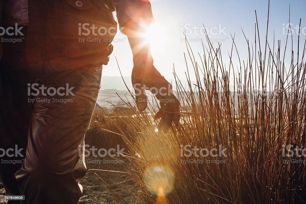 Farmers hand running through long grass stock photo