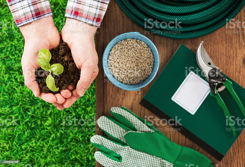 Farmer's hand with basil sprout stock photo
