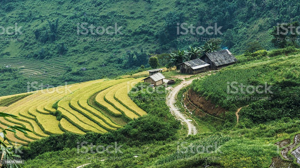 Farmers houses on hill with the rice terraced fields royalty-free stock photo