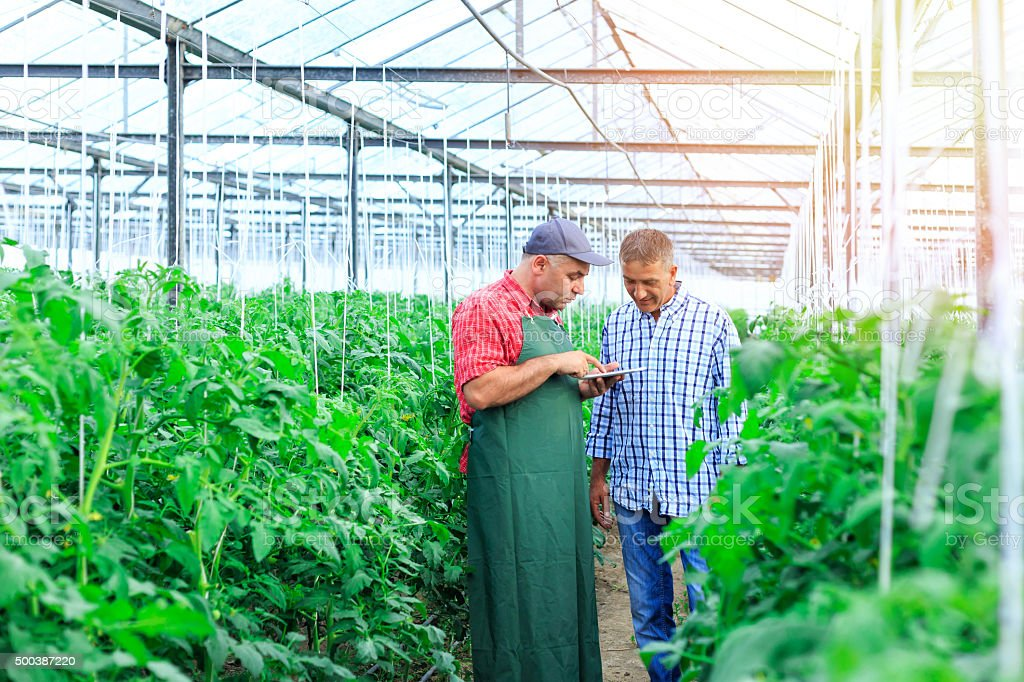 Farmers in a greenhouse looking at digital tablet stock photo