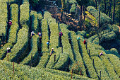 Farmers in Longjing