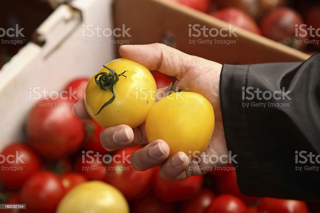 Farmers Market: Choosing Tomatoes royalty-free stock photo
