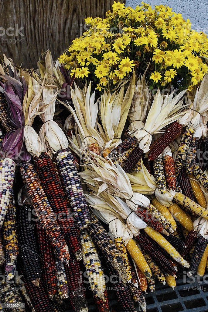 Farmers market Indian Corn and fall flowers East Lyme Connecticut stock photo