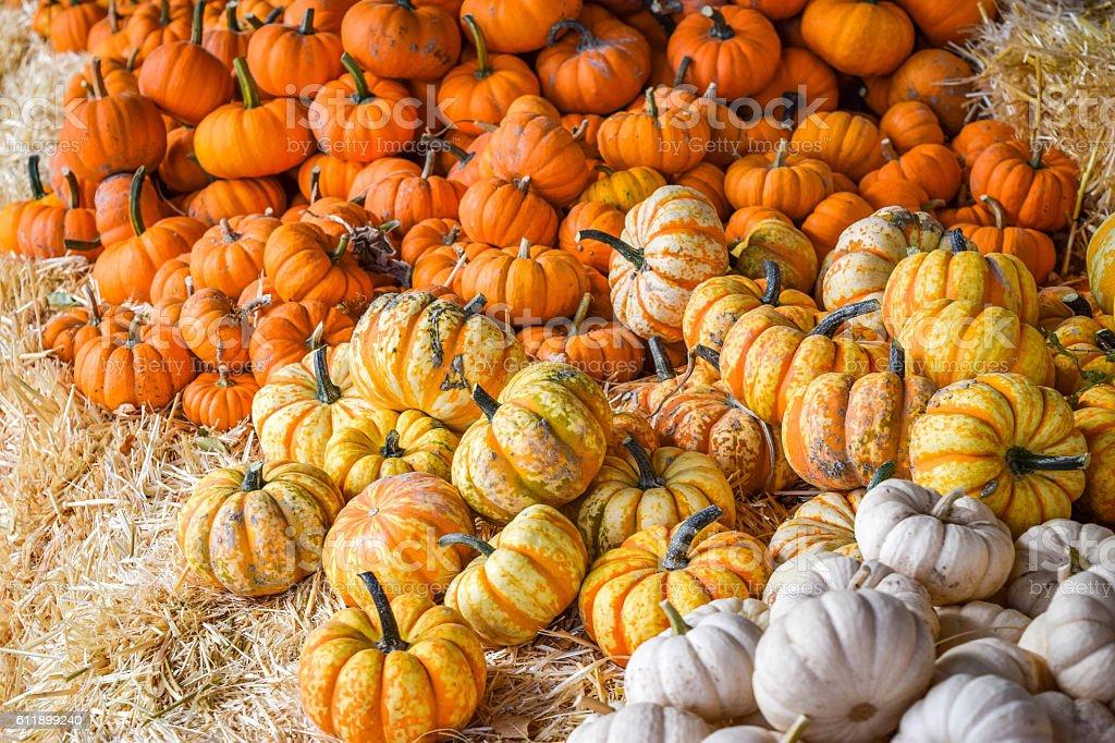 Farmers Market Mini Pumpkins stock photo