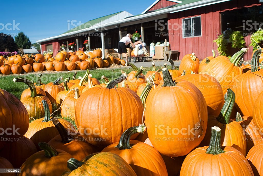 Farmers Market Pumpkins royalty-free stock photo