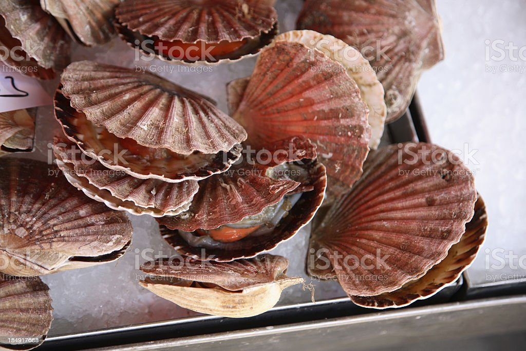 Farmers Market: Scallops royalty-free stock photo