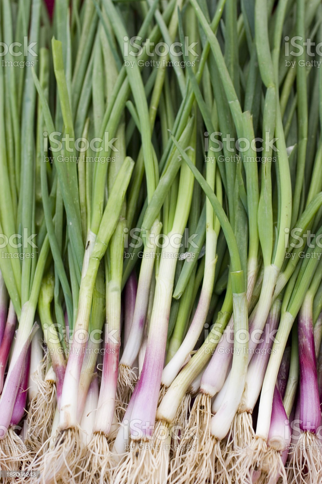 Farmers Market: Spring Garlic royalty-free stock photo