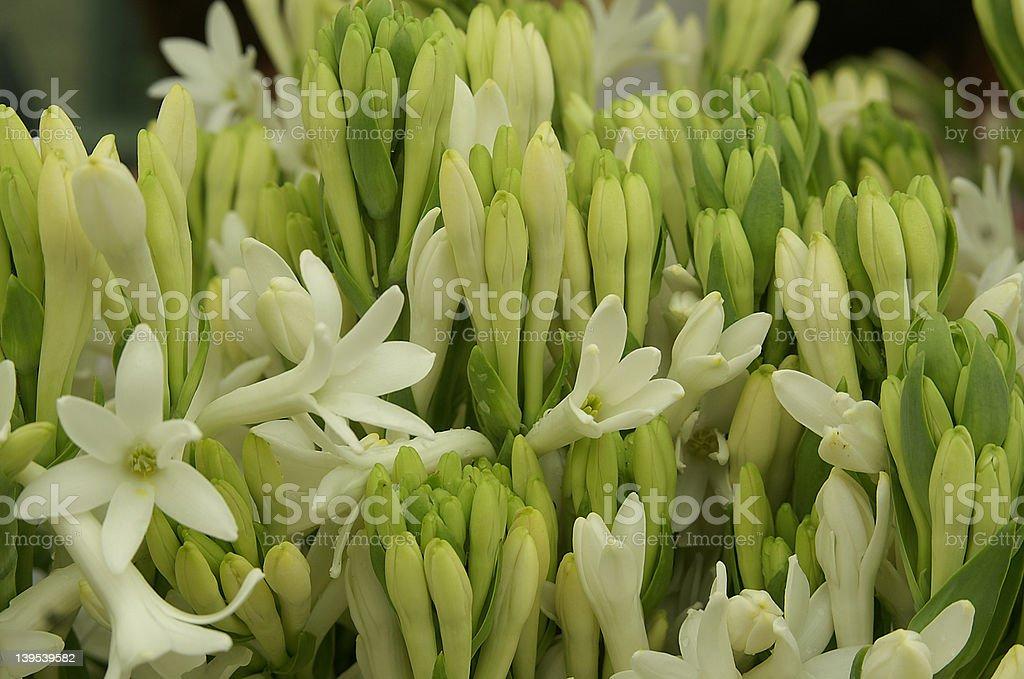 Farmers market tuberose flowers stock photo