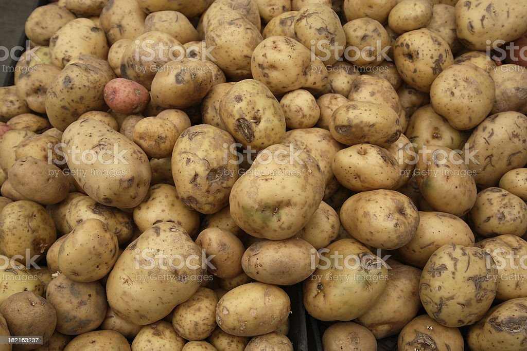 Farmers Market: Yukon Gold Potatoes stock photo