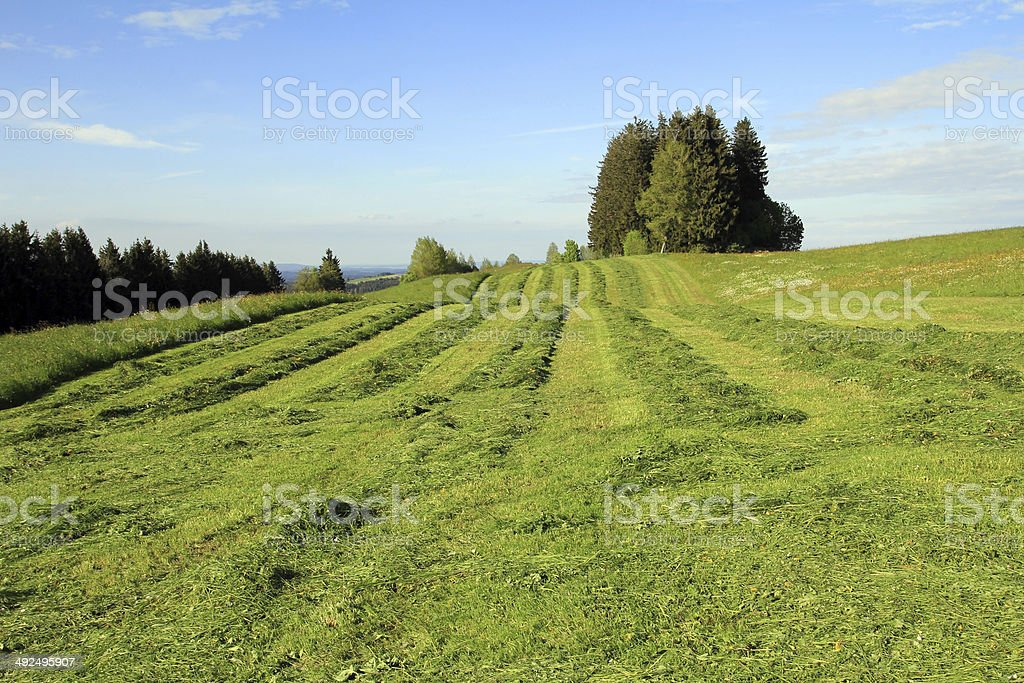 farmers mow the field stock photo