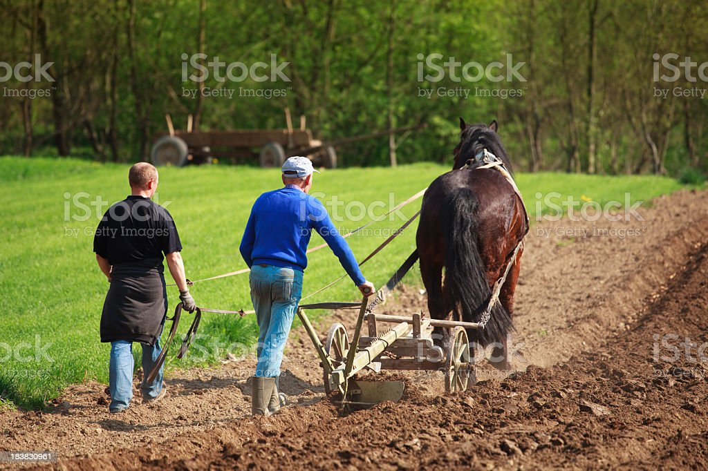 Farmers plowed land horse stock photo