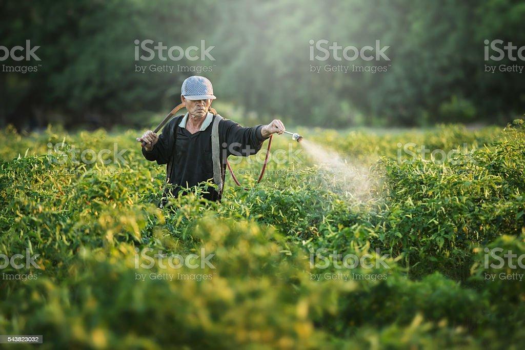 Farmers spraying stock photo
