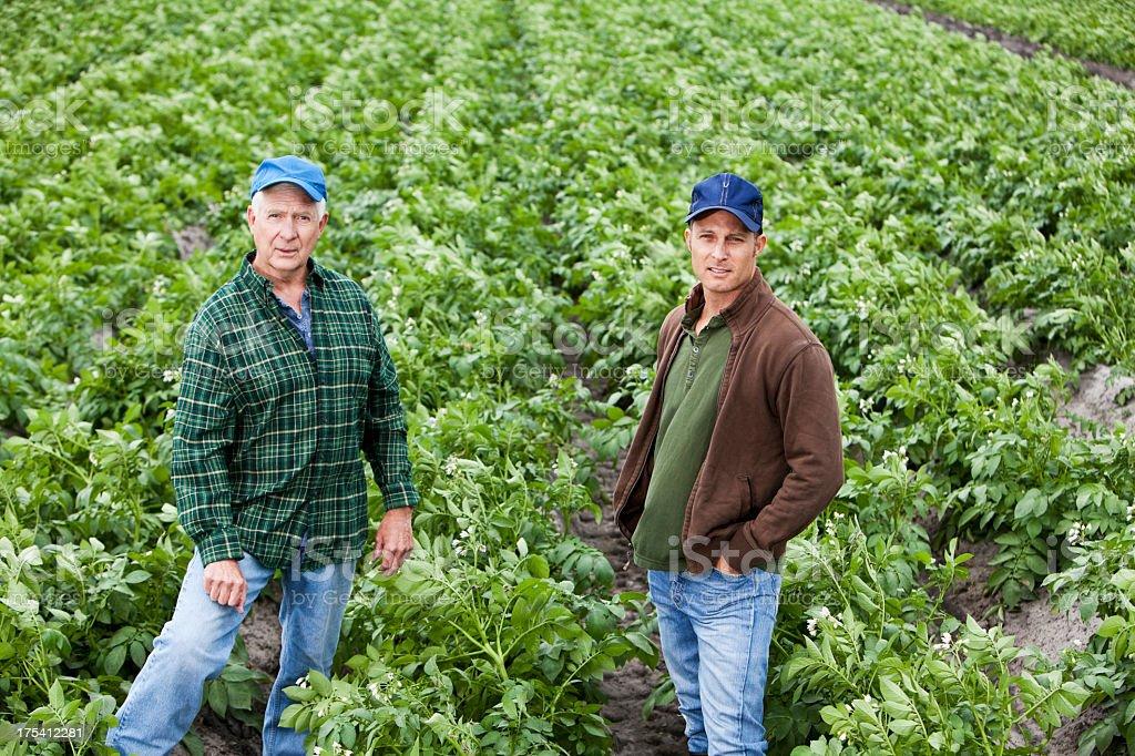 Farmers standing in potato field stock photo