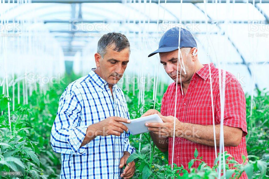 Farmers using digital tablet stock photo