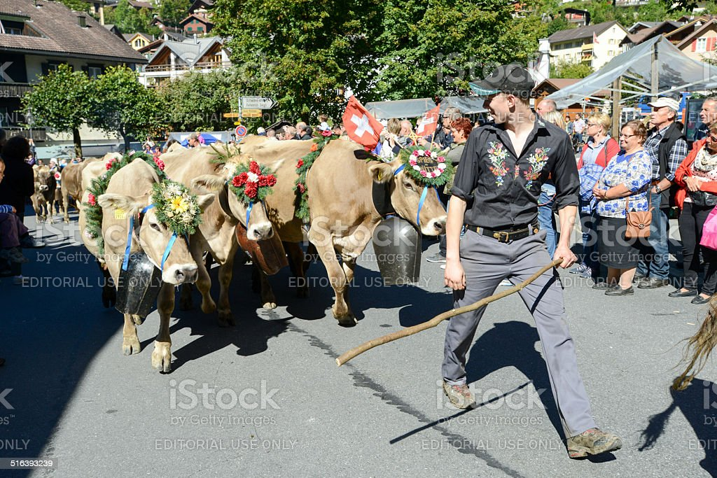 Farmers with a herd of cows on the annual transhumance stock photo