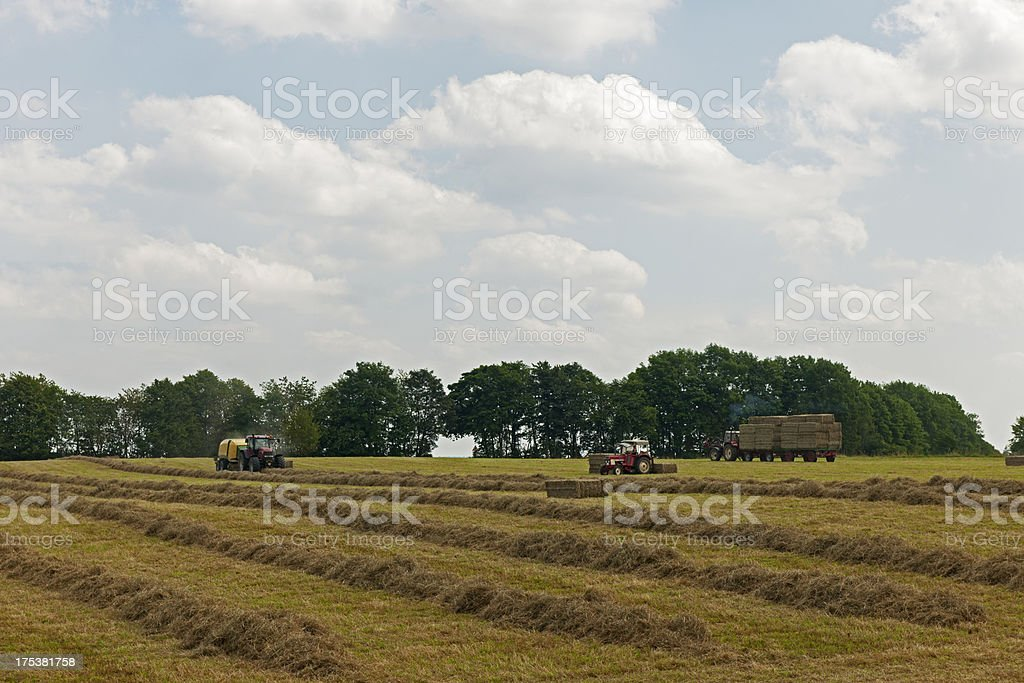 Farmers work royalty-free stock photo