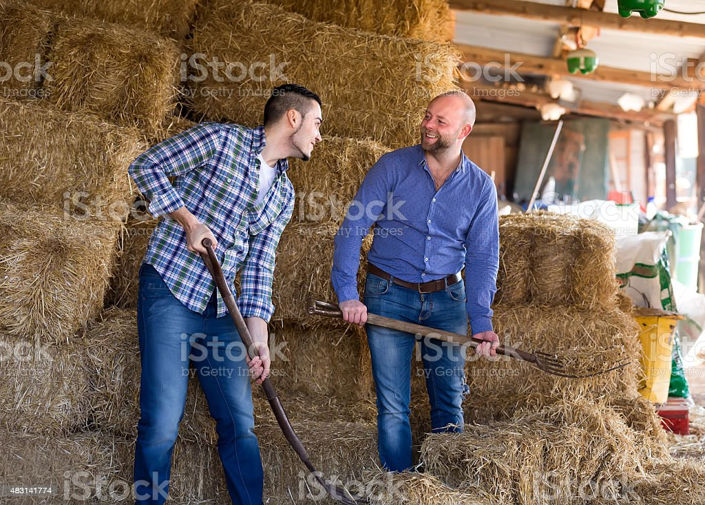 Farmers working in a shed stock photo