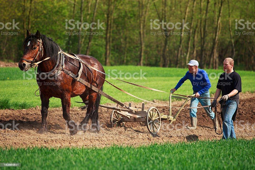 Farmers working in field stock photo