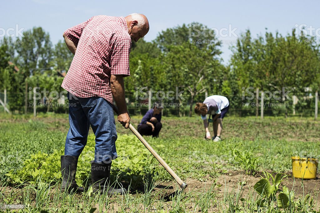 Farmers working royalty-free stock photo