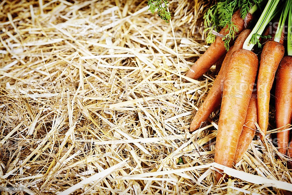 Farm-fresh carrots laid out on straw background royalty-free stock photo