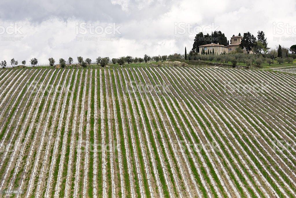 Farmhouse and New Vineyard, Chianti Region in Tuscany stock photo