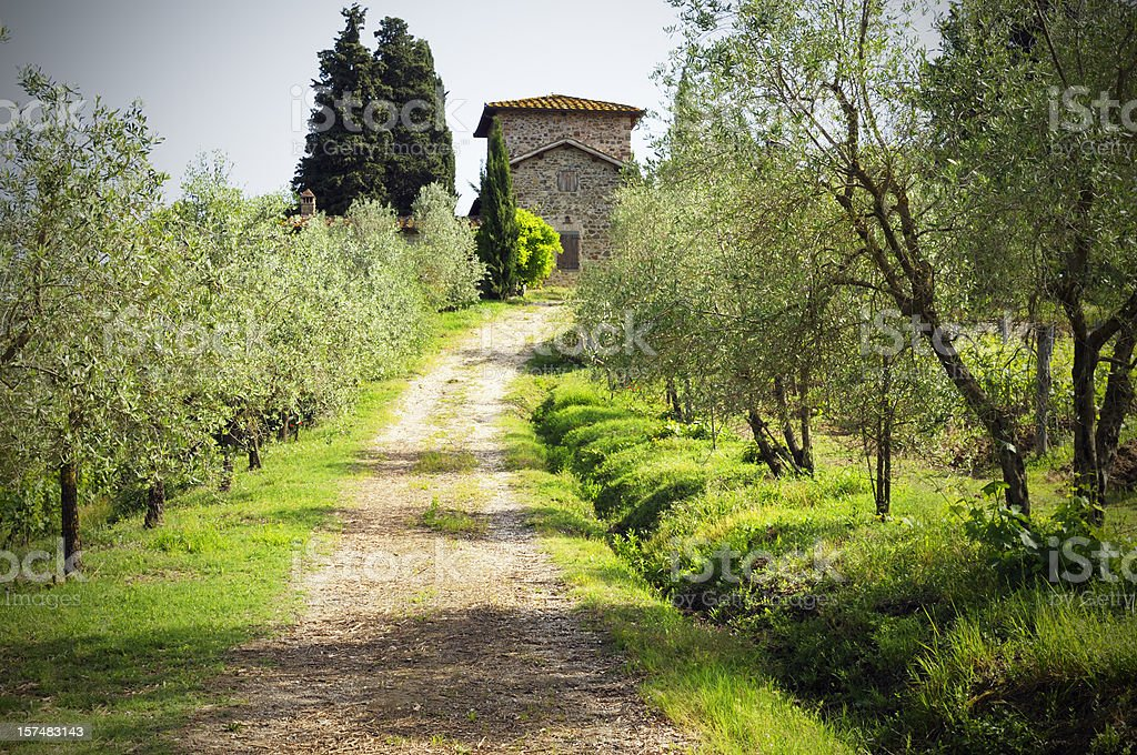 Farmhouse and Pathway through Olive Trees royalty-free stock photo