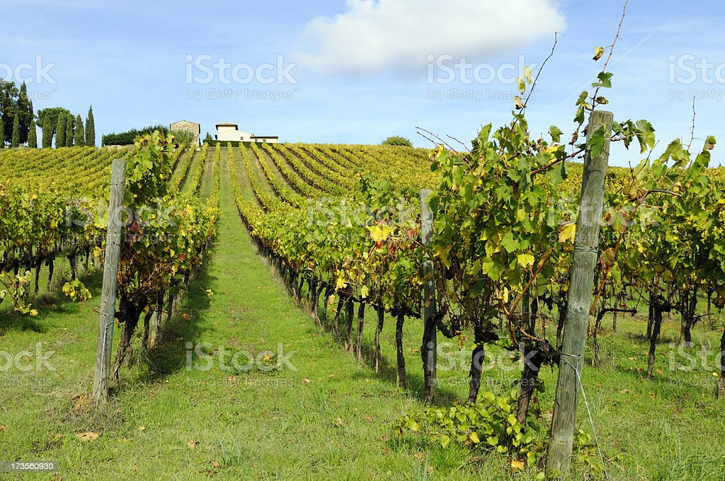 Farmhouse and Vineyard in Fall royalty-free stock photo