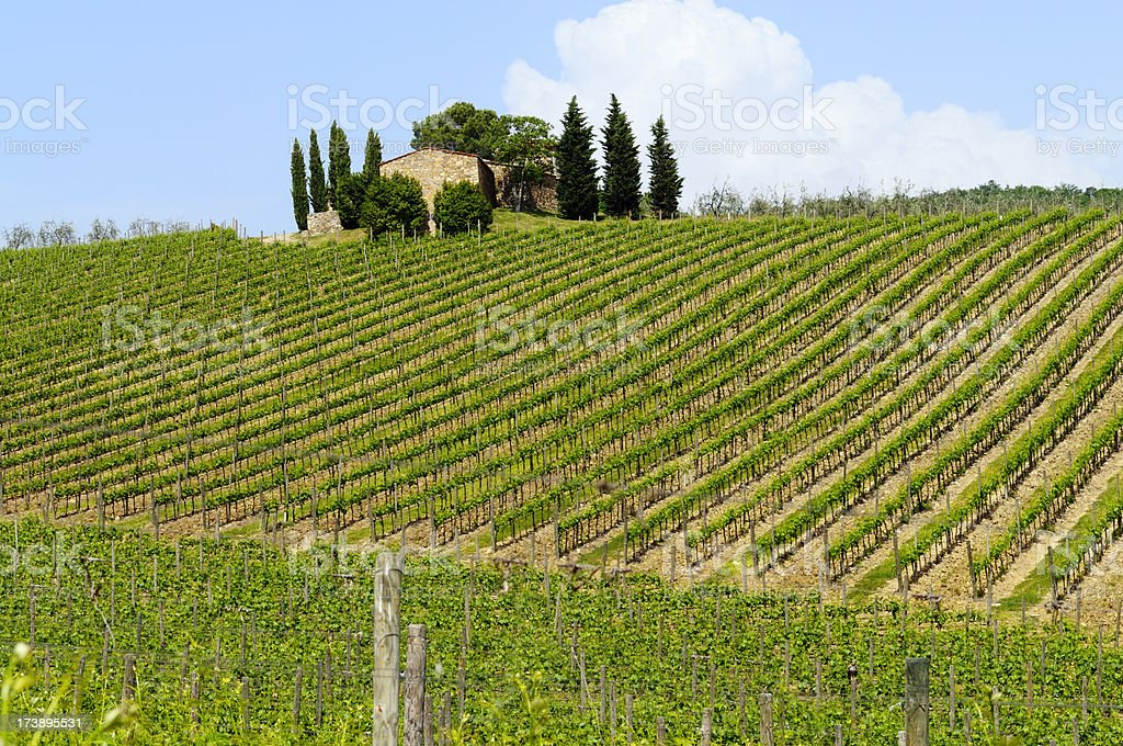 Farmhouse and Vineyard in Springtime,Tuscany royalty-free stock photo