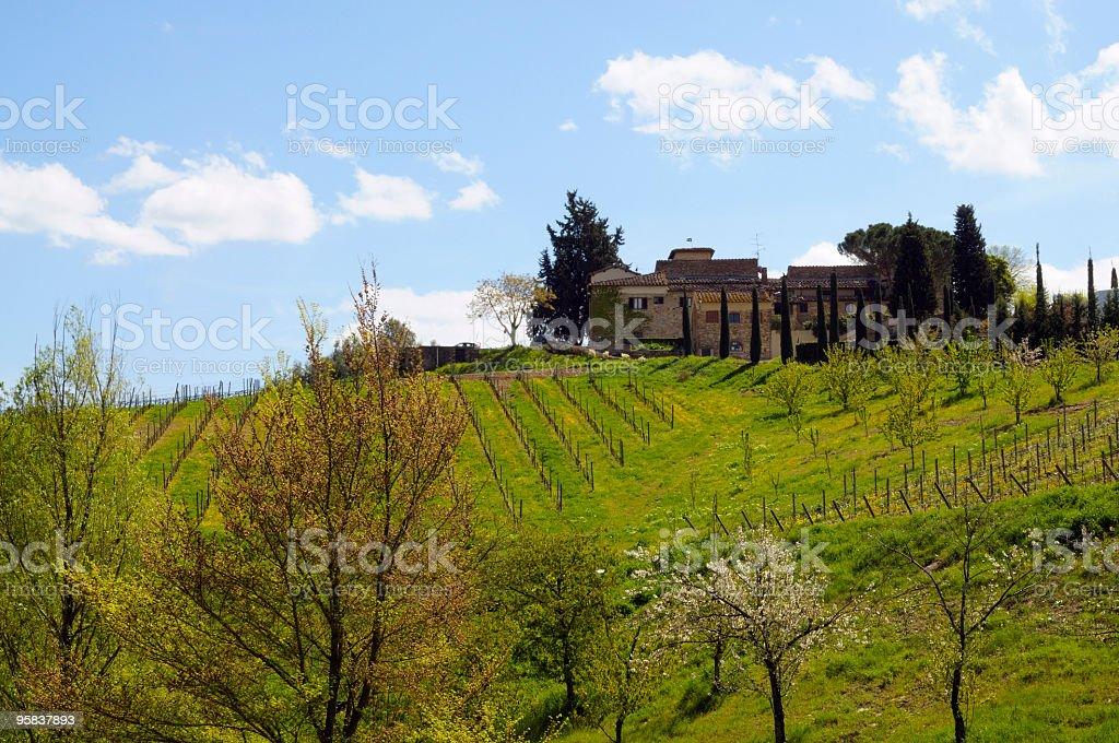 Farmhouse and vineyard stock photo