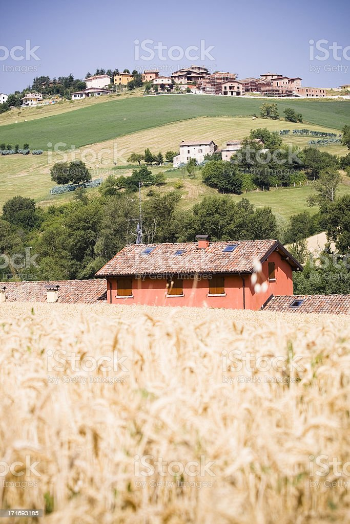 Farmhouse in a golden wheat field stock photo