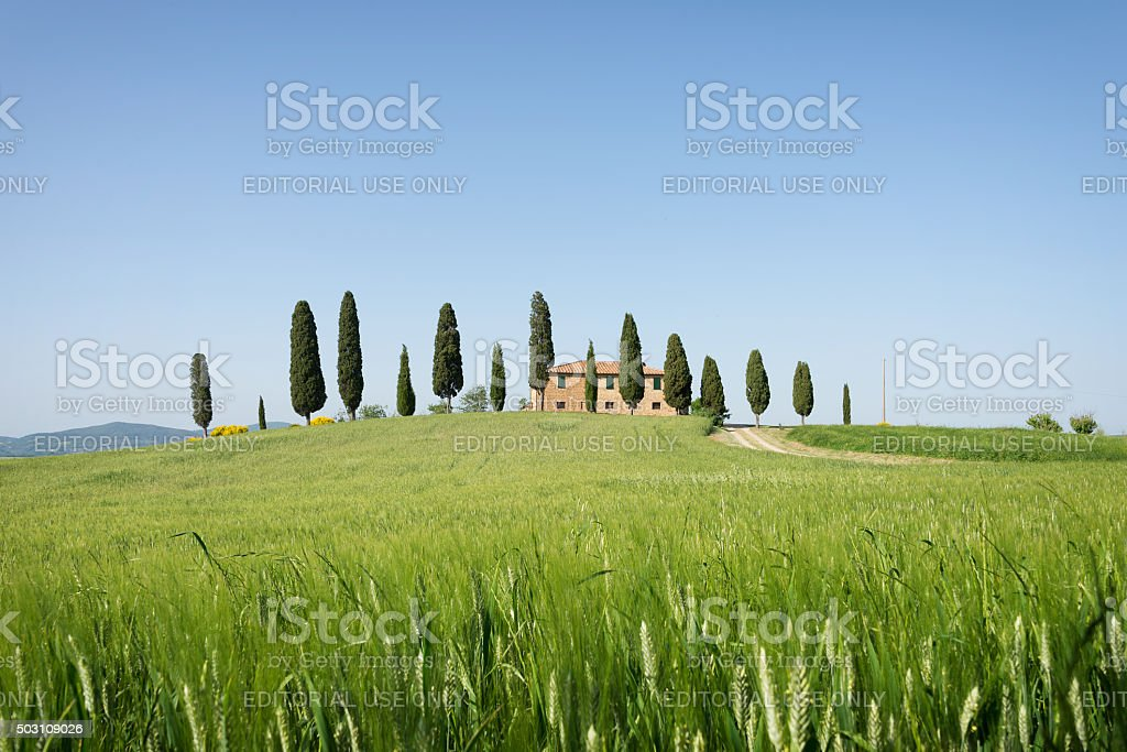 Farmhouse with cypress trees and wheat in Tuscany stock photo