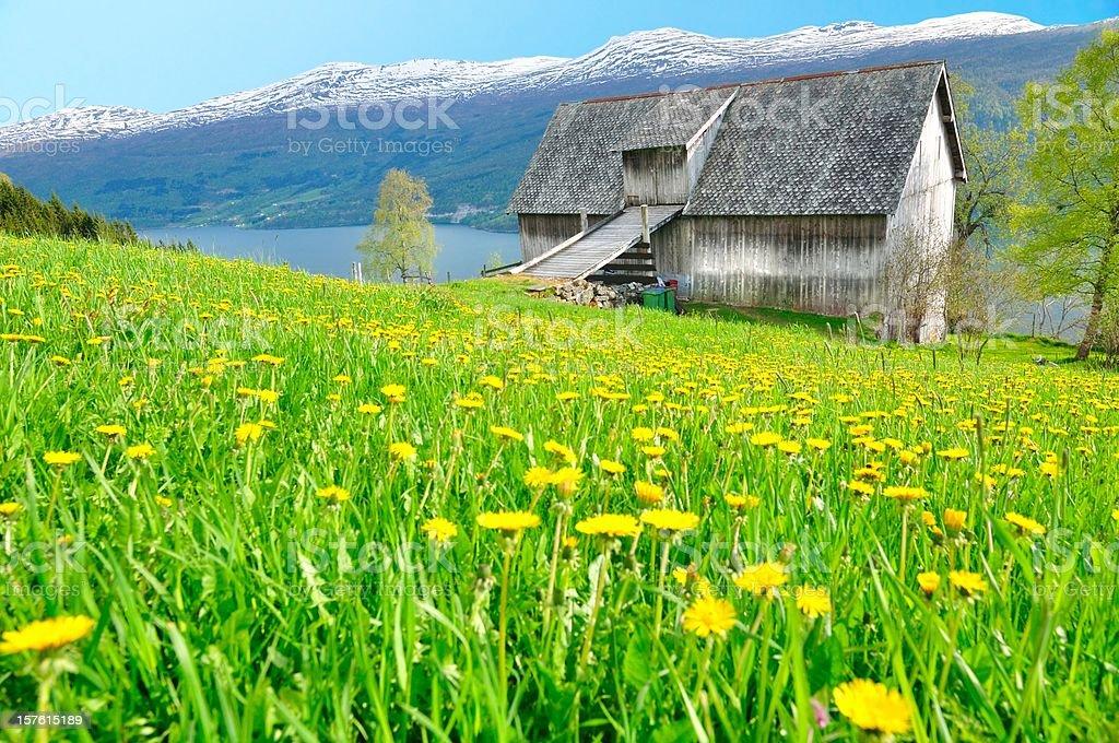 Farmhouse with daisy meadow , fjord , mountain royalty-free stock photo