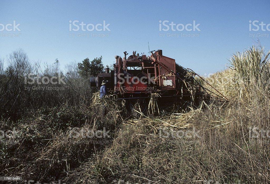 Farming and harvesting sugar cane in Louisiana, USA. stock photo