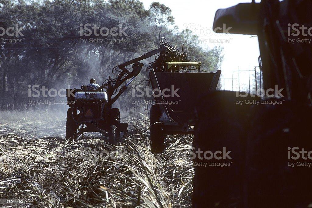 Farming and harvesting sugar cane in Louisiana, USA. royalty-free stock photo