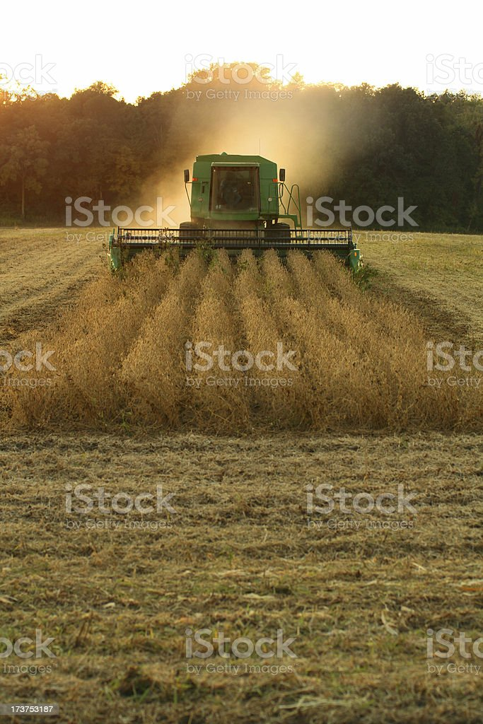 Farming at Dusk royalty-free stock photo