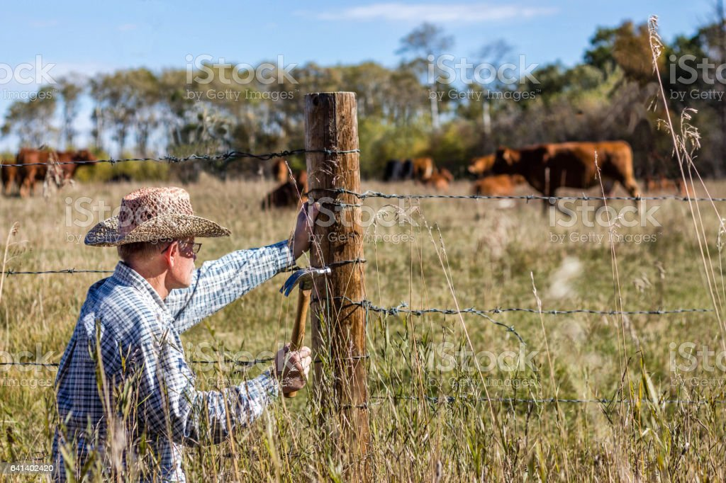 farming cowboy crouched down fixing the fence. stock photo