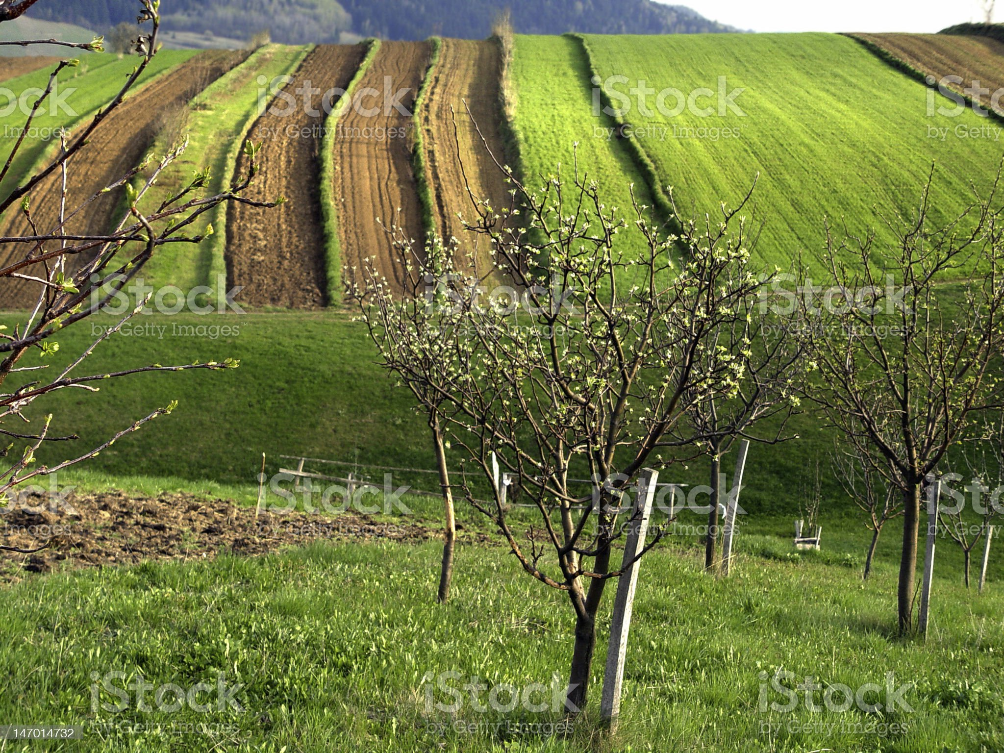 Farming Field Cultivated Land royalty-free stock photo