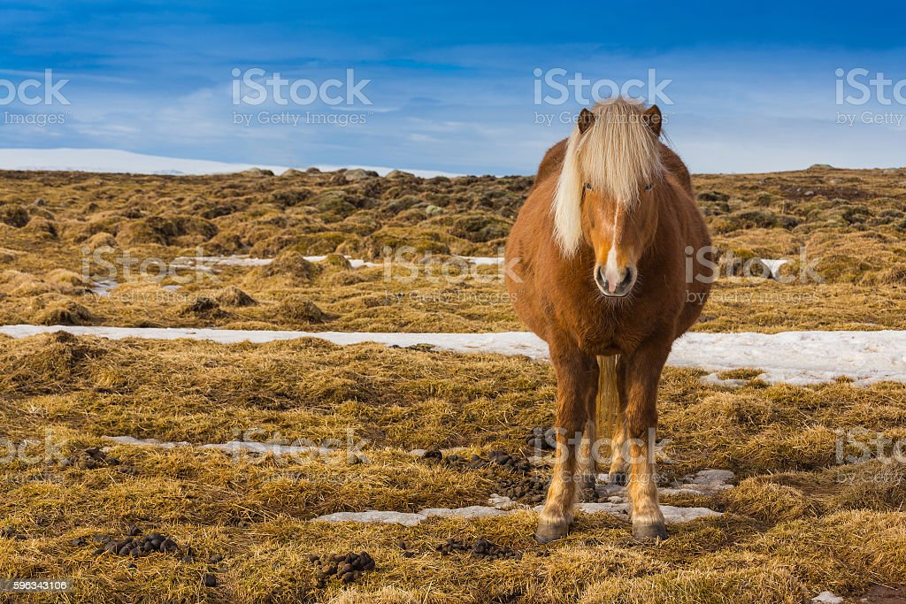 Farming horse over dry grass with clear blue sky stock photo